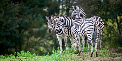 Afbeelding bij Olmense Zoo – Pakawi Park