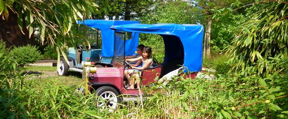 Ontspannen genieten van een ritje door de natuur. Laat je verleiden door een rustig autoritje, in de prachtige natuur van het park. En dit in een antieke auto uit grootvaders tijd. Sturen kan het allerkleinste kind.
