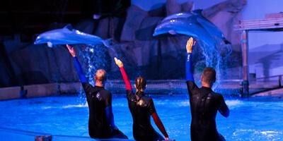 Afbeelding bij Dolfijnenvoorstelling