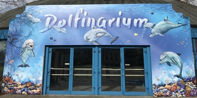 Afbeelding bij How the dolphinarium works