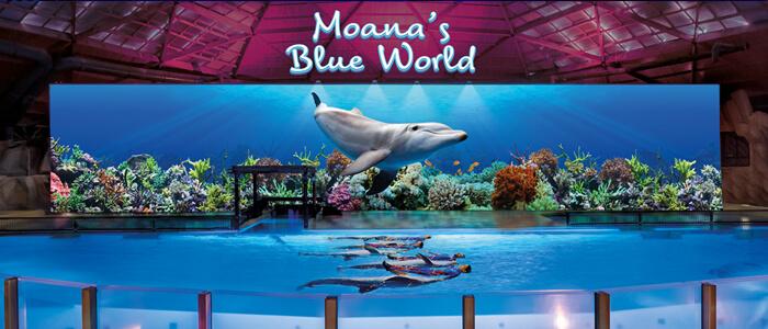 Ontdek de nieuwe dolfijnenshow Moana's Blue World in Boudewijn Seapark Brugge.