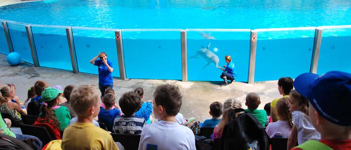 Ontdek de educatieve sessies in Boudewijn Seapark en leer alles bij over de tuimelaar, de Californische zeeleeuw en de zeezoogdieren in het algemeen.