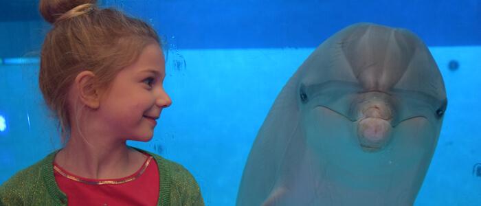 Doe een fotoshoot met onze dolfijnen en maak zo je dromen waar!