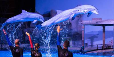 Afbeelding bij Dolphin show