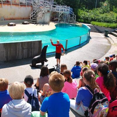 Beleef een dolfijne schoolreis naar Boudewijn Seapark en geniet van voordelige schooltarieven! Reserveren kan gemakkelijk via de website.