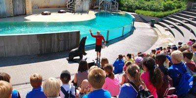 Beleef een onvergetelijke schoolreis in Boudewijn Seapark!