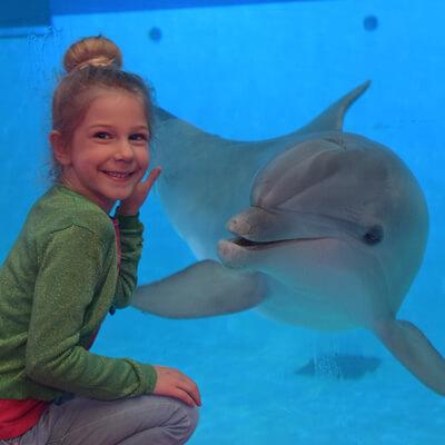 Maak een exclusieve fotoreportage met dolfijnen in Boudewijn Seapark Brugge!