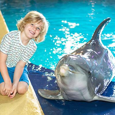 Droom je van een foto van jezelf met een dolfijn of een zeeleeuw? Dat kan in Boudewijn Seapark na elke show!