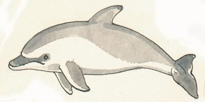 Afbeelding bij Educatieve tekeningen